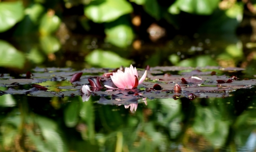 Picture no: 11761572 Widerschein Created by: MoNoir