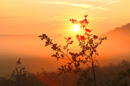 Picture no: 11810540 Pflanze im Sonnenaufgang Created by: falconer59