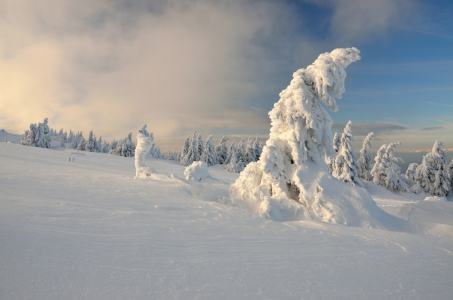Picture no: 11830649 Winter im Harz Created by: Christiane Dreher