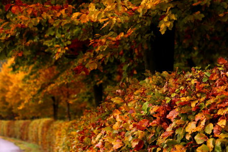 Picture no: 11840787 Herbstfarben Created by: Heike Hultsch