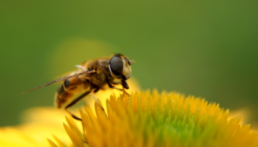 Picture no: 11841919 Biene Created by: MoNoir