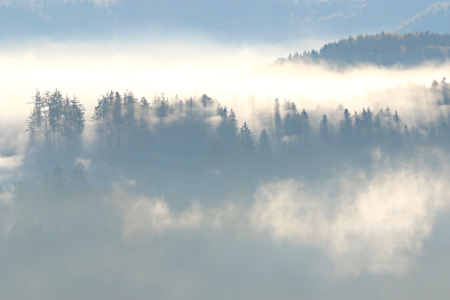 Picture no: 11844221 Der Wald im Nebel Created by: falconer59