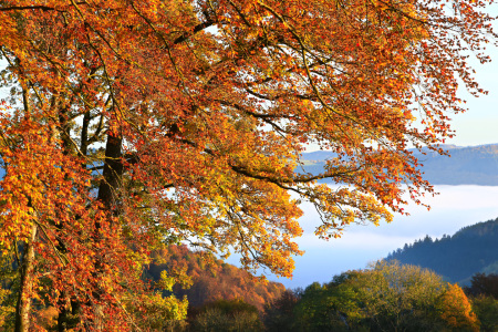 Picture no: 11844247 Herbstfarben Created by: falconer59