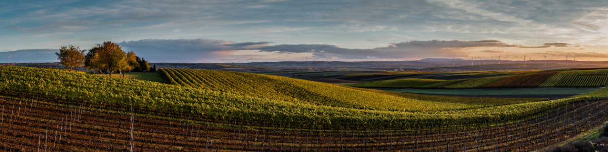 Picture no: 11847677 Goldenes Rheinhessen 1 Created by: Erhard Hess