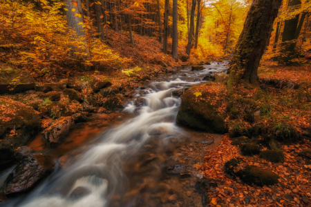 Picture no: 11851115 Herbstliche Ilse Created by: sh-picture