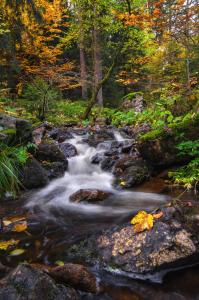 Picture no: 11852405 Herbst im Harz  Created by: Steffen Gierok