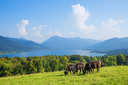Picture no: 11858012 Hainznhoehe am Tegernsee Created by: SusaZoom