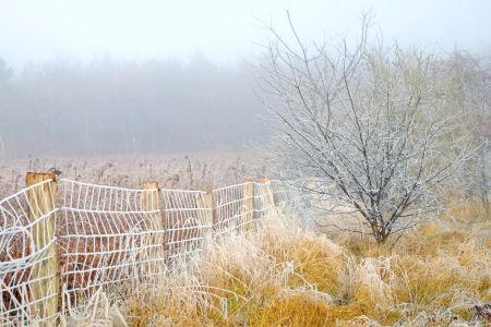 Picture no: 11859985 Winterlandschaft im Nebel Created by: Ostfriese