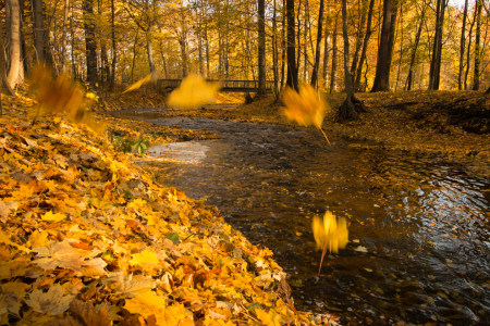 Picture no: 11868022 Herbst am Fluss Created by: Harry-Hennington