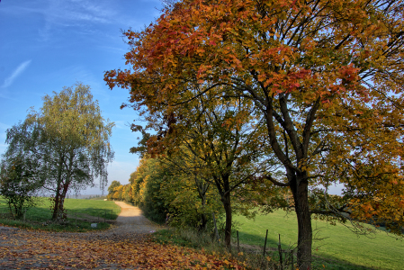 Picture no: 11868301 Herbstlicher Feldweg Created by: RonNi