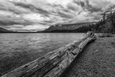 Picture no: 11868335 Am Lake McDonald - Glacier NP Created by: TomKli