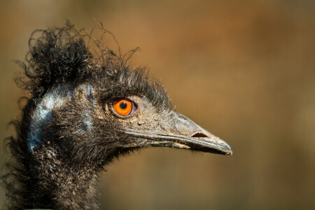 Picture no: 11870831 Kopf eines Emus Created by: Cloudtail