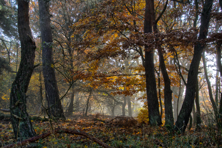 Picture no: 11871560 Nebel im Herbstwald Created by: RonNi