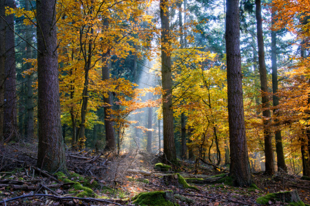 Picture no: 11871843 Spotlight im Herbstwald Created by: RonNi