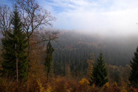 Picture no: 11873460 Herbststimmung Created by: RonNi