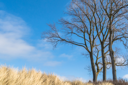 Picture no: 11877749 Baum bei Ahrenshoop - Düne Created by: luxpediation