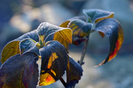 Picture no: 11880313 Herbstwinter Created by: Ostfriese