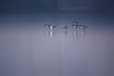 Picture no: 11882159 Enten am See Created by: luxpediation