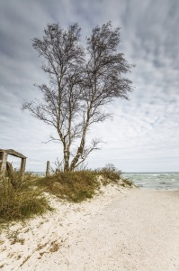 Picture no: 11883099 BIRCH at the BEACH Created by: Ursula Reins