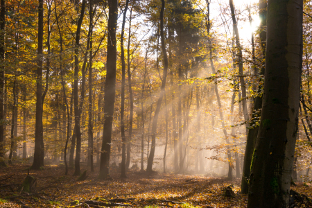 Picture no: 11901458 Nebel im Herbstwald Created by: RonNi