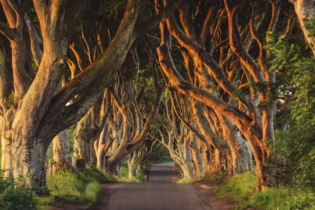 Picture no: 11924632 Irland - The Dark Hedges Created by: Jean Claude Castor