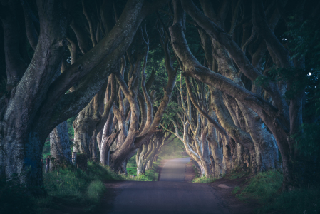 Picture no: 11926835 Irland - The Dark Hedges Created by: Jean Claude Castor