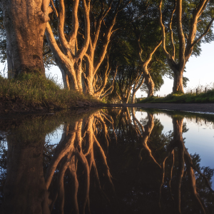 Picture no: 11926843 Irland - The Dark Hedges Mirror Created by: Jean Claude Castor