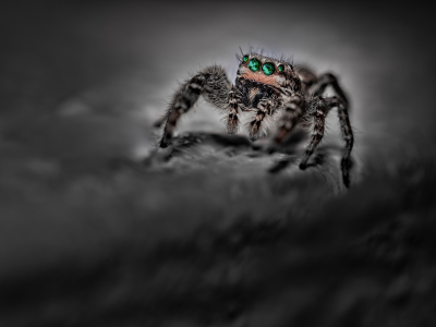 Picture no: 11927240  Springspinne - smaragd -  dark night Created by: Richard-Young