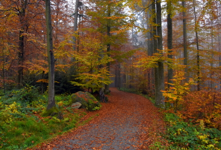 Picture no: 11930503 Weg im Herbstwald Created by: GUGIGEI