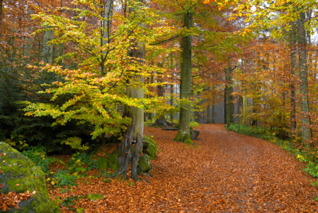 Picture no: 11930504 Weg im Herbstwald Created by: GUGIGEI