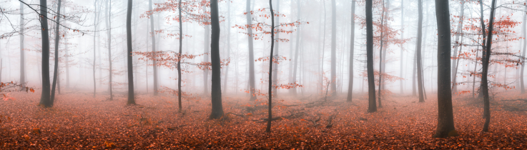 Picture no: 11931642 Herbstwald im Nebel Created by: eyetronic