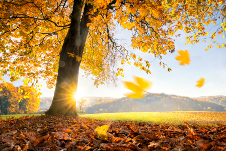 Picture no: 11931703 Goldener Herbst Created by: eyetronic