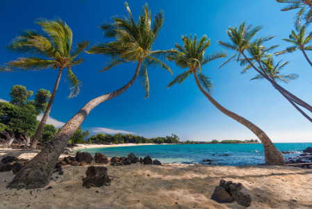 Picture no: 11935452 Palmen am Strand auf Big Island - Hawaii Created by: orxy