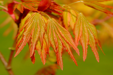 Picture no: 11938534 Herbstlaub Created by: Ostfriese