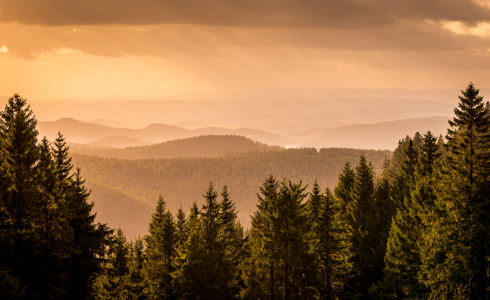 Picture no: 11947657 Fernsicht im Harz Created by: Steffen Henze