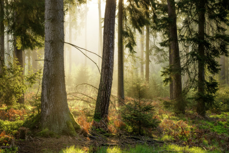 Picture no: 11953557 Morgens im Wald Created by: artmobe