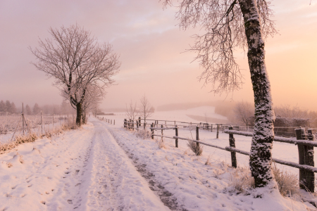 Picture no: 11957920 Wintermorgen Created by: Dora-Pi-Art-Photographie