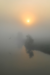 Picture no: 11962795 Vogelflug im Nebel Created by: falconer59