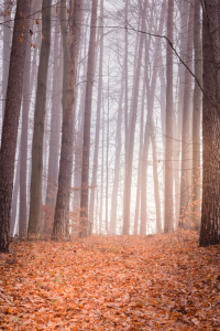 Picture no: 11964723 Waldweg - Natur Meditation der Stille Created by: luxpediation