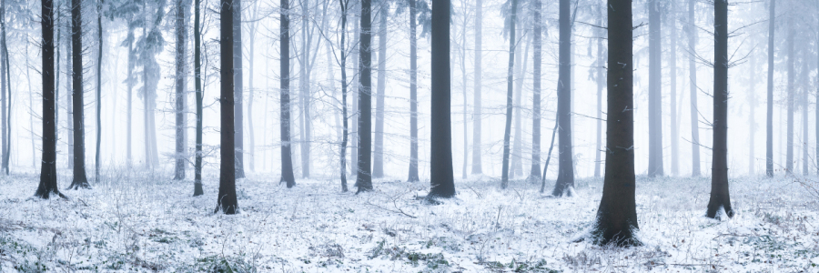 Picture no: 11966156 Wald Panorama im Winter  Created by: eyetronic