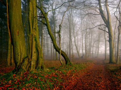 Picture no: 11969915 Geniesse den Herbstwald Created by: Ostfriese