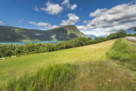Picture no: 11978336 Am Lustrafjord - Norwegen Created by: KundenNr-160338
