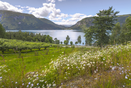 Picture no: 11978524 Blumenwiese am Fjord - Norwegen Created by: KundenNr-160338