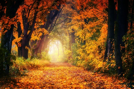 Picture no: 11983627 Herbst Allee Created by: JS-FotoSelect