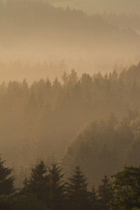 Picture no: 11991029 Morgenstimmung mit Herbstnebel Created by: luxpediation
