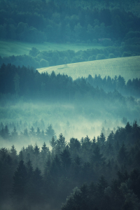 Picture no: 11995139 Landschaft im Morgennebel Created by: luxpediation