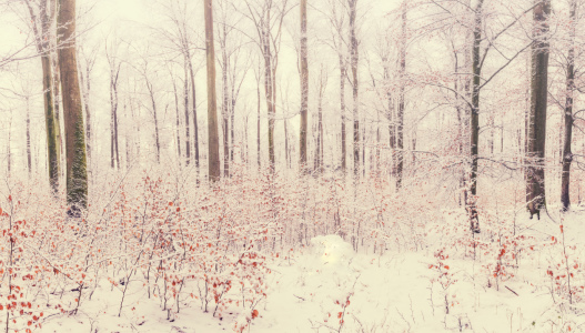 Picture no: 12019774 Winter  Created by: luxpediation