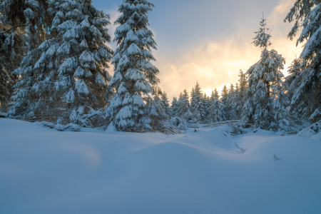 Picture no: 12021133 Wald im Winter Created by: Martin Wasilewski