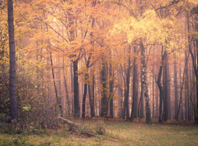 Picture no: 12021142 Wald im Herbst Created by: luxpediation