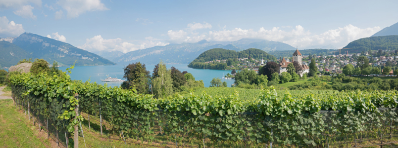 Picture no: 12028963 Rebberg Panorama Spiez Berner Oberland Created by: SusaZoom